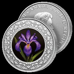 Dollar Iris du Québec
